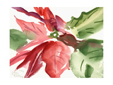 Poinsettia, 2003 Giclee Print by Claudia Hutchins-Puechavy