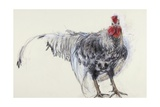 Cockerel, 2008 Giclee Print by Lara Scouller