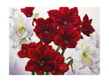Red and White Amaryllis, 2008 Giclee Print by Christopher Ryland