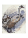 Mute Swan, 2008 Giclee Print by Lara Scouller