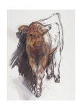 Highland Calf, 2008 Giclee Print by Lara Scouller