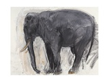 Sir Roger the Elephant, 2008 Giclee Print by Lara Scouller