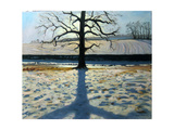 Tree and Shadow, Calke Abbey, Derbyshire Giclee Print by Andrew Macara