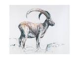 Venerando Stambecco, 2006 Giclee Print by Mark Adlington