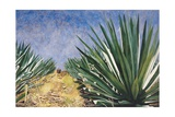 Agaves with Blue Sky, 2004 Giclee Print by Pedro Diego Alvarado