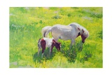 Piebald Horse and Foal Giclee Print by William Ireland
