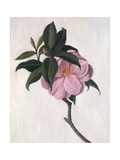 Camelia, 1998 Giclee Print by Ruth Addinall
