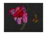Lanarth Magnolia Giclee Print by Deborah Barton