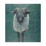Waiting Sheep, 2000 Giclee Print by Peter Wilson