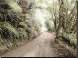 Lost Coast Road Stretched Canvas Print by Laura Culver