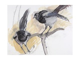 Two Magpies, 2008 Giclee Print by Lara Scouller