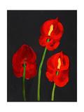 Anthurium Giclee Print by Deborah Barton