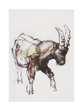 Young Ibex, Gran Paradiso, 2005 Giclee Print by Mark Adlington