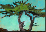 Cypresses Stretched Canvas Print by Paul Bailey
