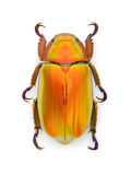 Platinum Scarab Mutation Photographic Print by Christopher Marley