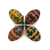 Four Shield Bugs Photographic Print by Christopher Marley