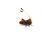 Tree Hopper Photographic Print by Christopher Marley