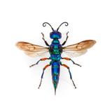 Borneo Wasp Lámina fotográfica por Christopher Marley