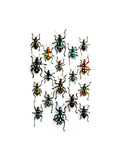 Walking Weevils Photographic Print by Christopher Marley