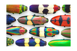 Jewel Beetles Photographic Print by Christopher Marley