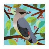 American Birds - Cedar Waxwing Giclee Print by Lorena Siminovich
