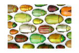 Jeweled Scarab Mosaic Photographic Print by Christopher Marley