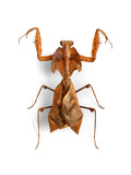 Mantis 4 Photographic Print by Christopher Marley
