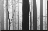 Forest Code Stretched Canvas Print by Nicholas Bell