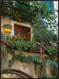 Grape Arbor and Flowers, Lake Garda, Malcesine, Italy Framed Canvas Print by Lisa S. Engelbrecht