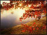 Sunrise Through Autumn Leaves Framed Canvas Print by Joseph Sohm