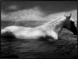 White Horse Swimming Framed Canvas Print by Tim Lynch