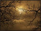 Branches Surrounding Harvest Moon Framed Canvas Print by Robert Llewellyn