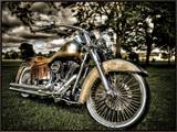 Harley Framed Canvas Print by Stephen Arens