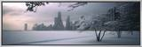 Snow Covered Tree at North Avenue Beach, Chicago, Illinois, USA Framed Canvas Print by  Panoramic Images