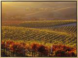 Carneros Ava. Scenic, Carneros, Napa Valley, California Framed Canvas Print by Karen Muschenetz