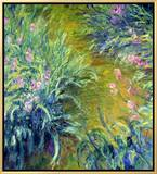 Iris Framed Canvas Print by Claude Monet