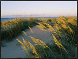 Sea Oats, Dunes, and Beach at Oregon Inlet Framed Canvas Print by Skip Brown