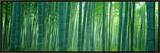 Bamboo Forest, Sagano, Kyoto, Japan Framed Canvas Print by  Panoramic Images