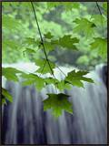 Maple Leaves against a Waterfall Backdrop Framed Canvas Print