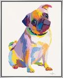 Pug Sketch Framed Canvas Print by Patti Mollica