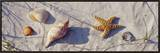 Starfish and Seashells on the Beach, Dauphin Island, Alabama, USA Framed Canvas Print by  Panoramic Images