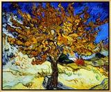 桑の木 Mulberry Tree, 1889 額入りキャンバスプリント : フィンセント・ファン・ゴッホ