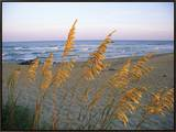 Beach Scene with Sea Oats Framed Canvas Print by Steve Winter