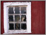 Cat sitting in a barn window Framed Canvas Print by Scott Barrow