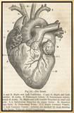 Anatomy of the Heart Framed Canvas Print