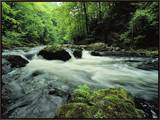 Woodland Stream and Rapids, Time Exposure Framed Canvas Print by Norbert Rosing