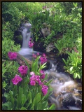 Wildflowers Along Flowing Stream in an Alpine Meadow, Rocky Mountains, Colorado, USA Framed Canvas Print by Christopher Talbot Frank