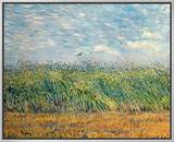 Wheatfield with Lark, 1887 Framed Canvas Print by Vincent van Gogh
