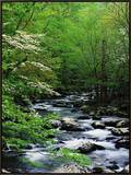 Stream in Lush Forest Framed Canvas Print by Ron Watts