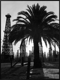 Billowing Palm Tree Gracing the Stark Structures of Towering Oil Rigs Framed Canvas Print by Alfred Eisenstaedt